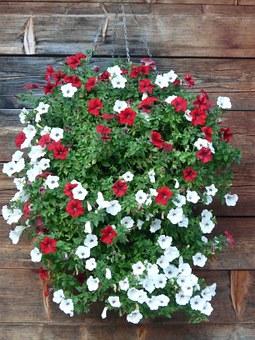 hanging garden-petunia