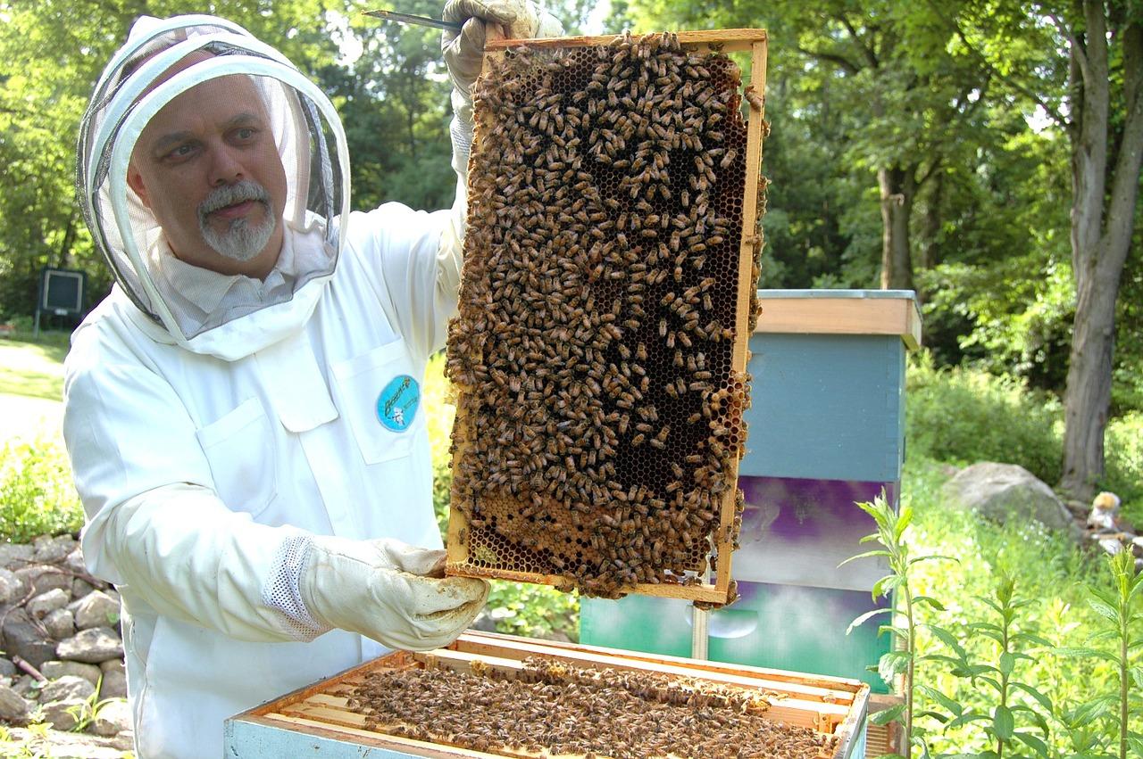 Bee, Colony