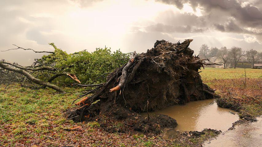 rain damage
