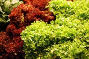 Salad-broccoli-and-cabbage