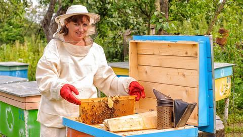 bee apprentice