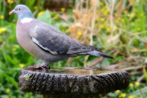 Bird, Bath