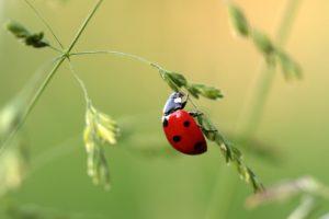 Natural, Grasses