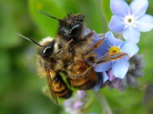 Queen Bee Sex