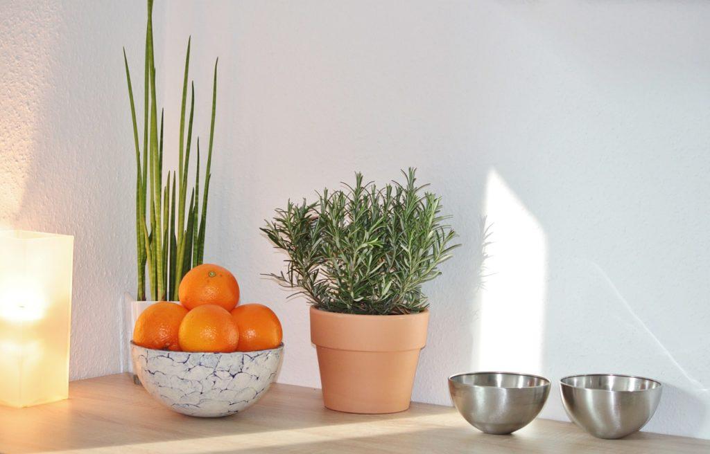Rosemary Herbal Essence