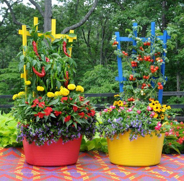 colorful-vegetable-garden
